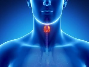 stress-adrenal-thyroid help Columbus Ohio